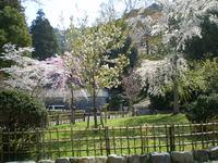 yoshimizu%20037.jpg